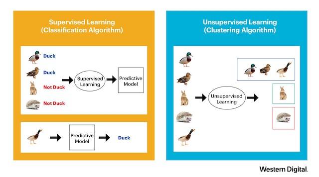 ML vs AI 2